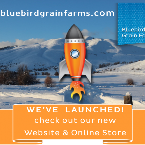 Welcome to our New Web Site and Online Store!