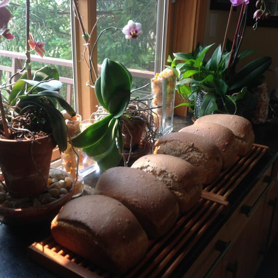Judy Prichard's Whole Wheat Bread